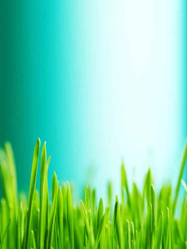 Medium foto gras achtergrond Jerphaas coaching, therapie, familieopstellingen